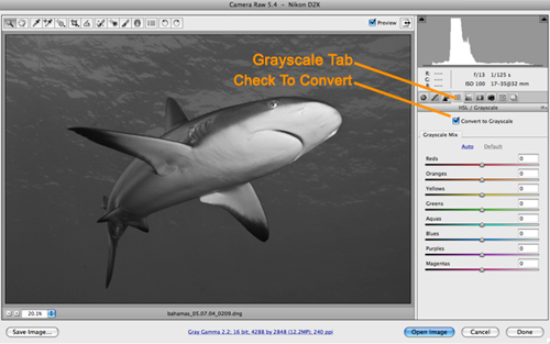 underwater photograph grayscale conversion