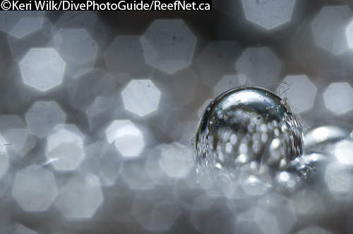 super macro abstract underwater photograph