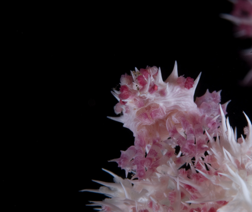 An underwater macro photograph with a black background by Matt Weiss