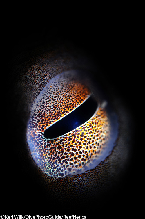 Abstract photograph of an eye by Keri Wilk