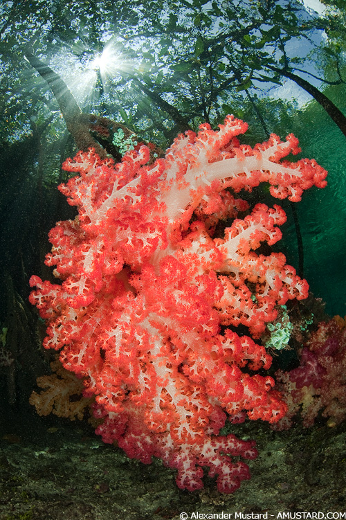 Wide Angle Close Focus Underwater Photograph Of A Soft Coral