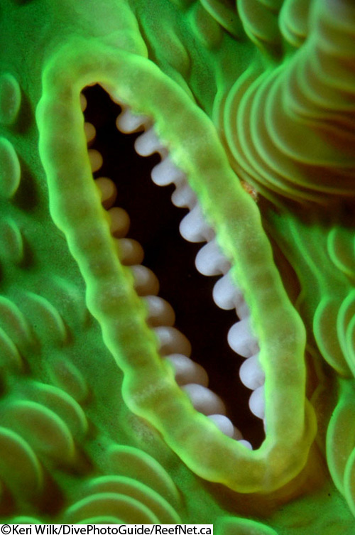 Abstract underwater photograph of coral
