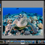 Adobe's Lightroom Creative Cloud for the Underwater Photographer
