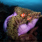 The Benefits of an Underwater Photo Pro