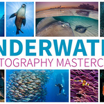 "Review: ""Underwater Photography Masterclass"" by Alex Mustard"