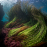 A Creative Underwater Shoot in the Channel Islands
