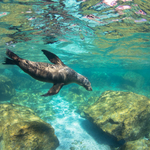 Photographing the Sea Lions of Los Islotes, Mexico