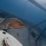 New Perspectives on the Kittiwake Shipwreck at Grand Cayman