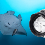 Wide-Angle Underwater Photography with the Inon Z-330 Strobe