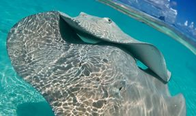 Stingray Split Shot
