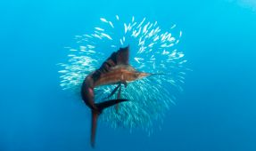 Top 5 Big Animal Underwater Photography Trips For 2012