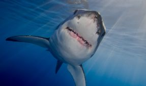 Behind the Shot: Great White in the Sun