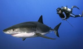Interview: Daniel Botelho's Out of Cage Great White Shark Photography