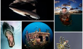 Five Underwater Photographers to Keep an Eye on in 2013