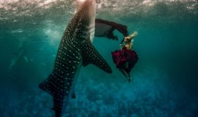 Models and Whale Sharks