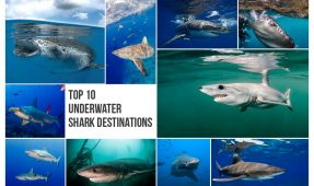 Top 10 Shark Photography Destinations