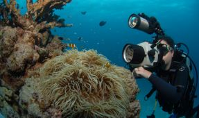 From the Field: The Work of Dive Photojournalists