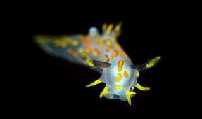 Shooting the Nudibranchs of Norway