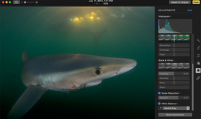 Apple's Photos App for the Underwater Photographer