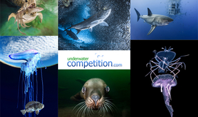 Behind the Shot: Underwater Competition Winners