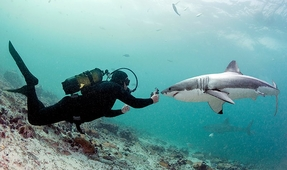 Cageless: Diving with South Africa's Great Whites