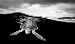 Fine Art Black and White Underwater Photography