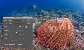 Quick Tip: Selective Color Adjustment for Great Blues in Underwater Imagery