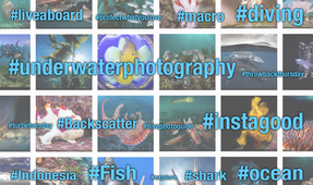 Hashtags for Underwater Images on Instagram