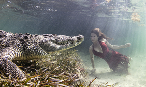 Photographing Crocodiles and Models