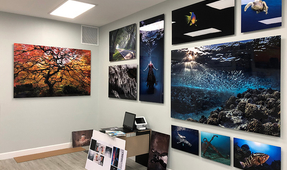 The Art of Aluminum Underwater Photo Prints