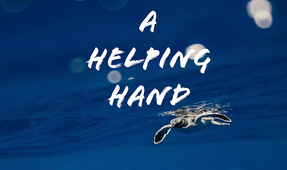 "Sneak Peek: ""A Helping Hand"""