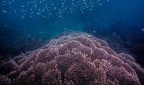 Corals of Asahan: A Freediving Photography Conservation Project