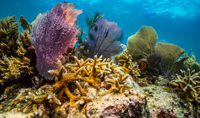 Visions of Hope: Coral Restoration Foundation Makes Waves