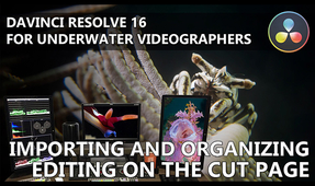 DaVinci Resolve for Underwater Videographers: Part I – Importing, Organizing and First Edits