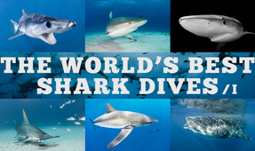 The World's Best Shark Dives – Part I