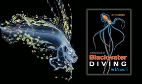 "Book Review: ""A Field Guide to Blackwater Diving in Hawaii"" by Jeff Milisen"
