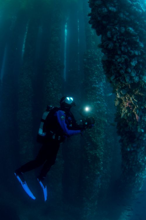 Scuba Diver in California's Oil Rigs
