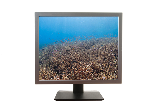 computer monitor with underwater photograph