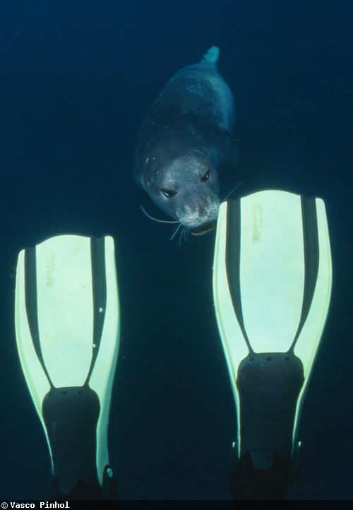 seal with fins