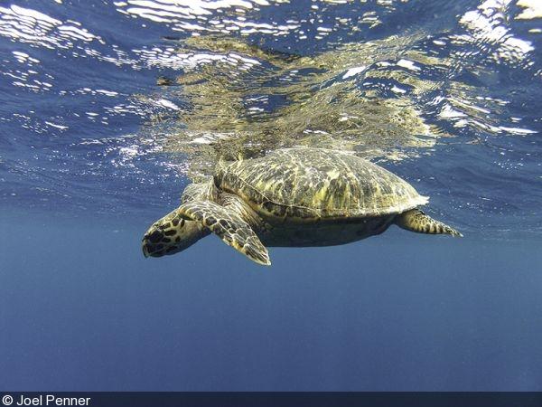 Underwater GoPro photo
