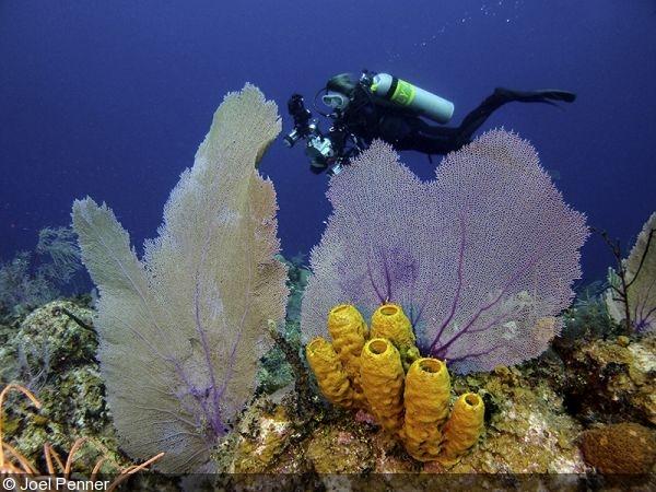 GoPro underwater white balance