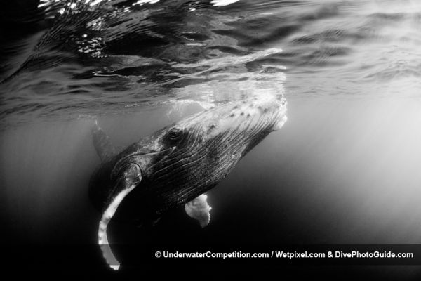 UWC Retrospective: A Decade of Underwater Imaging Excellence