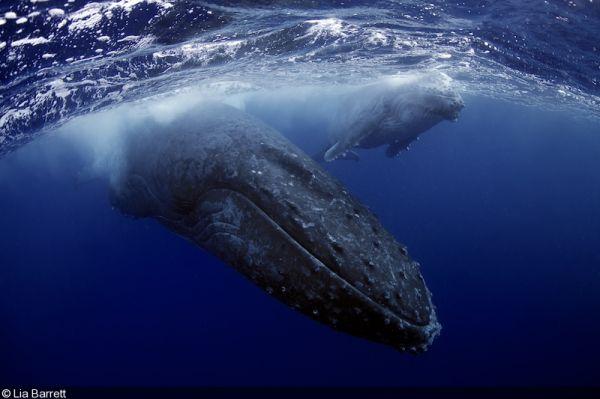 почему киты слышат под водой