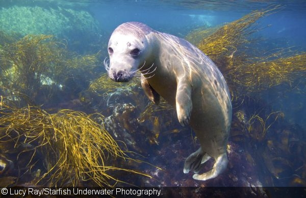 Gray Seal Photography In The Isles Of Scilly