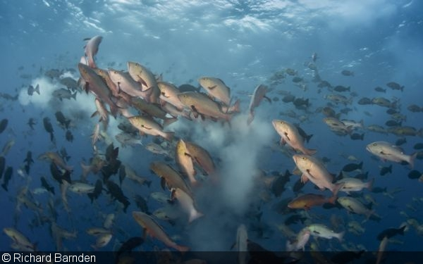 Photographing Fish Spawning Aggregations