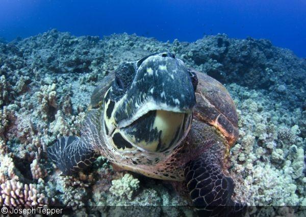 морские черепахи едят пластик