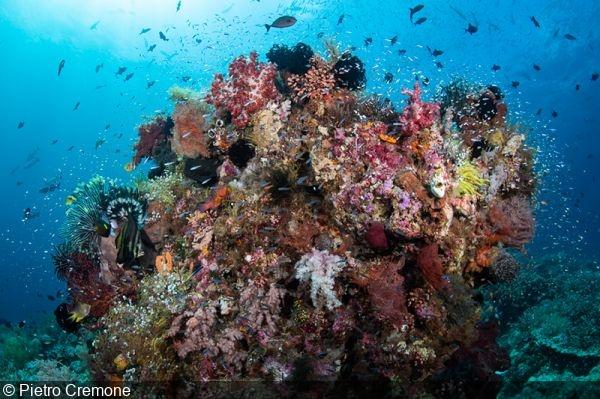 Wakatobi Workshop: Choosing the Ideal Destination for an Underwater Photo Trip