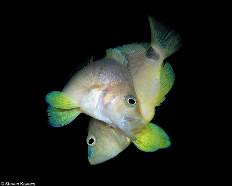 behavior of fish Orientation behavior in fish larvae: a missing piece to hjort's critical period  hypothesis erica staaterman a, claire b paris a,n, judith helgers b a university  of.