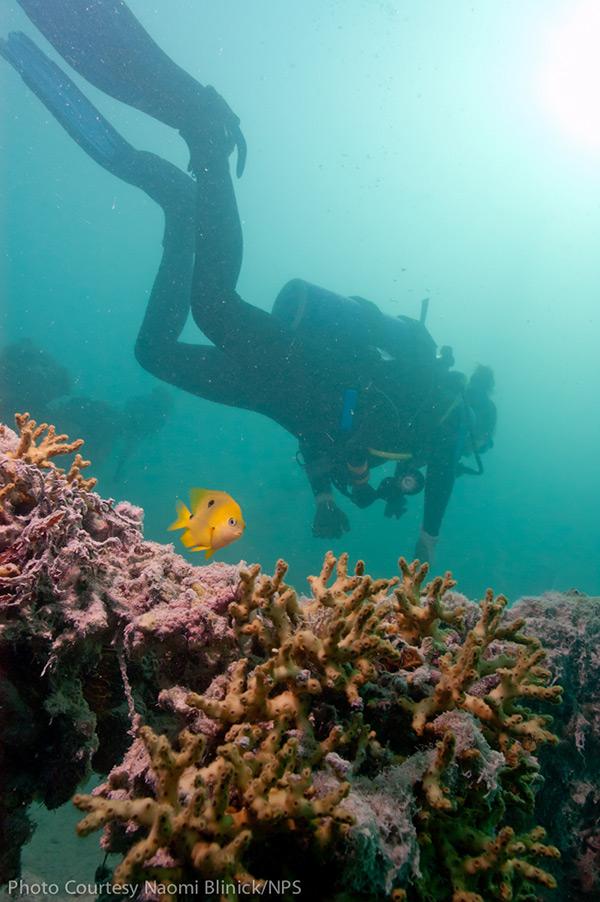 biscayne national park snorkeling