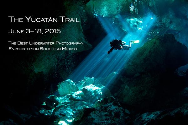"""От священных колодцев древних майя до дайвинга среди сотен голубых китов - необычная экспедиция для подводных фотографов """"Yucatán Trail 2015"""""""